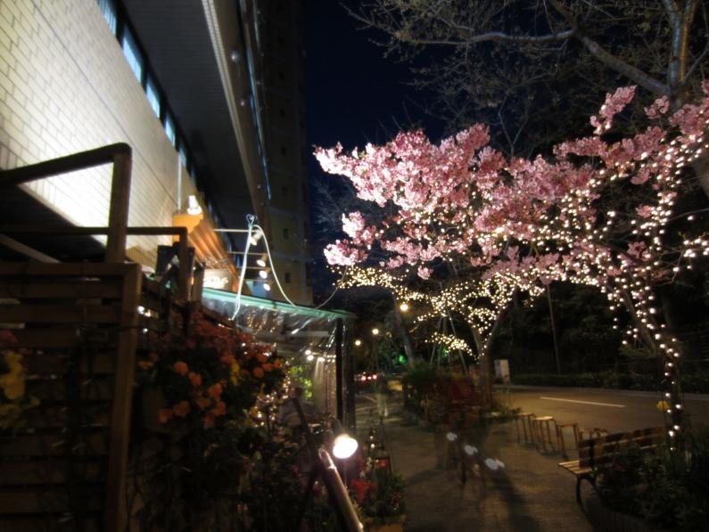 viele Läden schmücken den hauseigenen Sakura-Baum