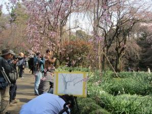 Viele sitzen im Park und malen die Blütenpracht