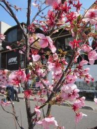 auch beim Shopping gibt es Blumen