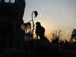 Arielle beim Sonnenuntergang
